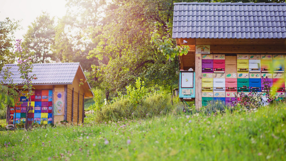 Why Beehives are Painted in Different Colors